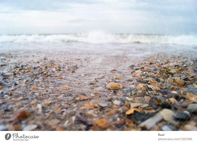 surf Nature Landscape Elements Sand Water Sky Clouds Summer Bad weather Mussel Mussel fragments Mussel shell Shell sand Waves Coast Beach North Sea Ocean Surf