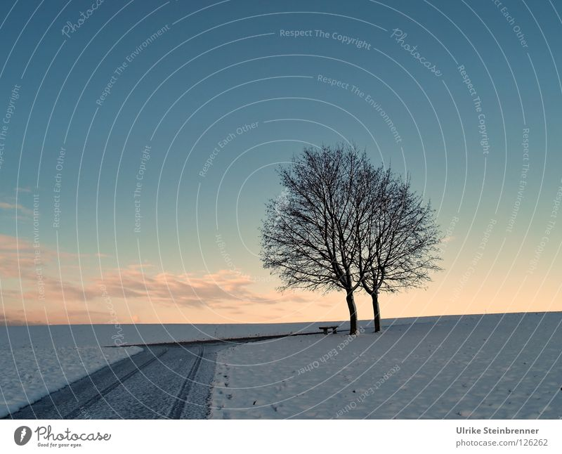 Single tree pair in winter in the morning Winter Snow Sky Clouds Ice Frost Meadow Field Street Lanes & trails Together chill Blue Pink White Society 2 Twin