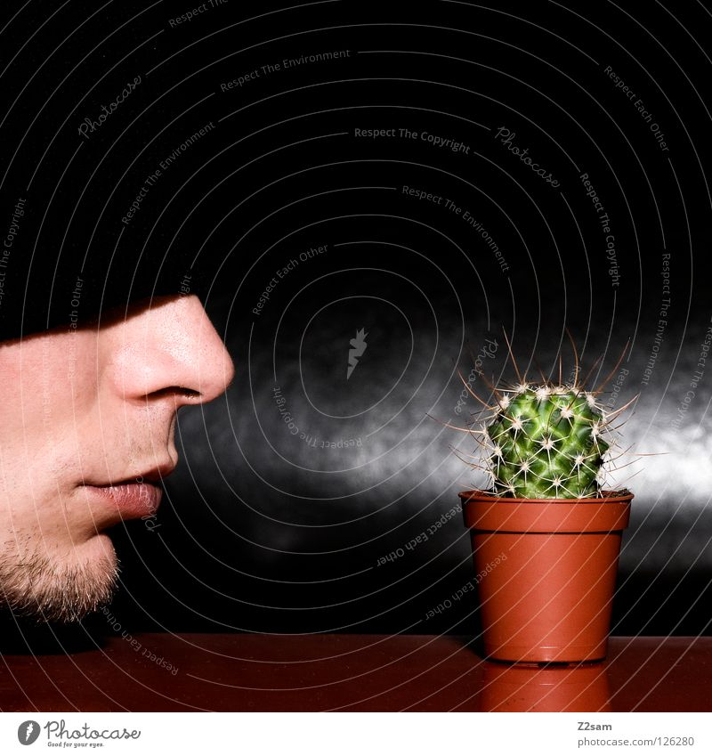 My little green cactus Cap Black Facial hair Cactus Man Plant Red Self portrait Table Inverted Funny Crazy Gap Glittering Dark dig Closed Face Nose Mouth Head