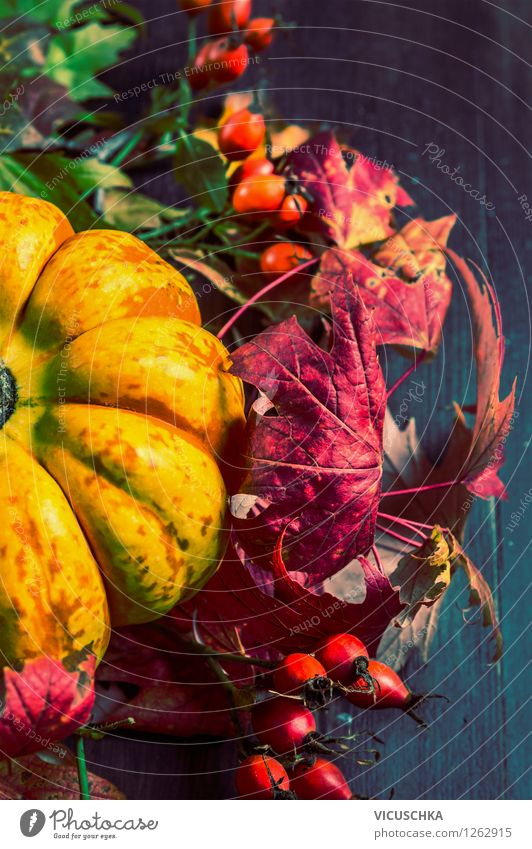 Autumn decoration with pumpkin, rose hip and coloured foliage Style Design Life Decoration Feasts & Celebrations Thanksgiving Hallowe'en Nature Plant Rose