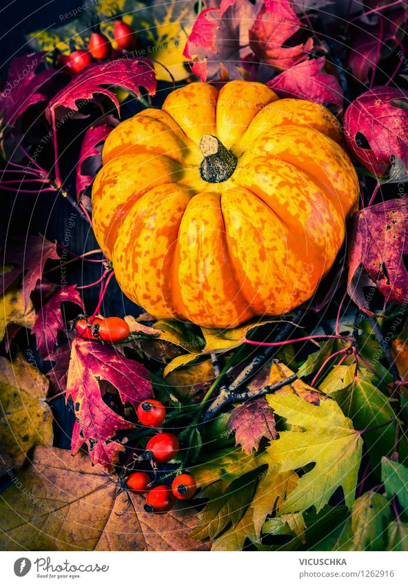 Pumpkin on herb leaves Vegetable Style Design Garden Feasts & Celebrations Thanksgiving Hallowe'en Nature Autumn Plant Yellow Tradition Background picture