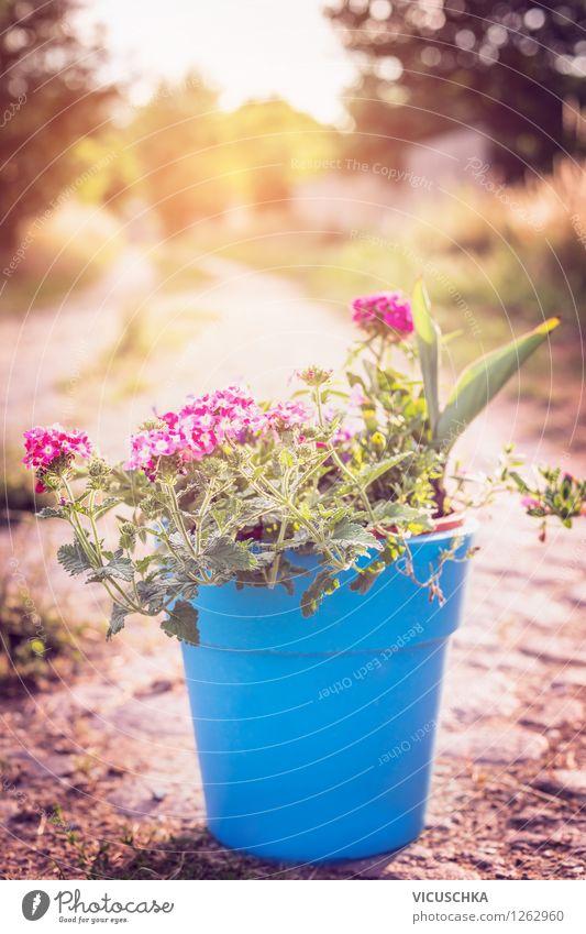 Nature Blue Plant Summer Tree Flower Autumn Lanes & trails Style Background picture Garden Pink Design Decoration Beautiful weather Terrace