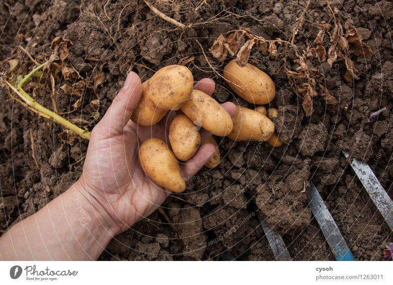 Nature Hand Garden Time Work and employment Contentment Field Growth Fresh Idyll Earth Success Poverty Change Agriculture Vegetable