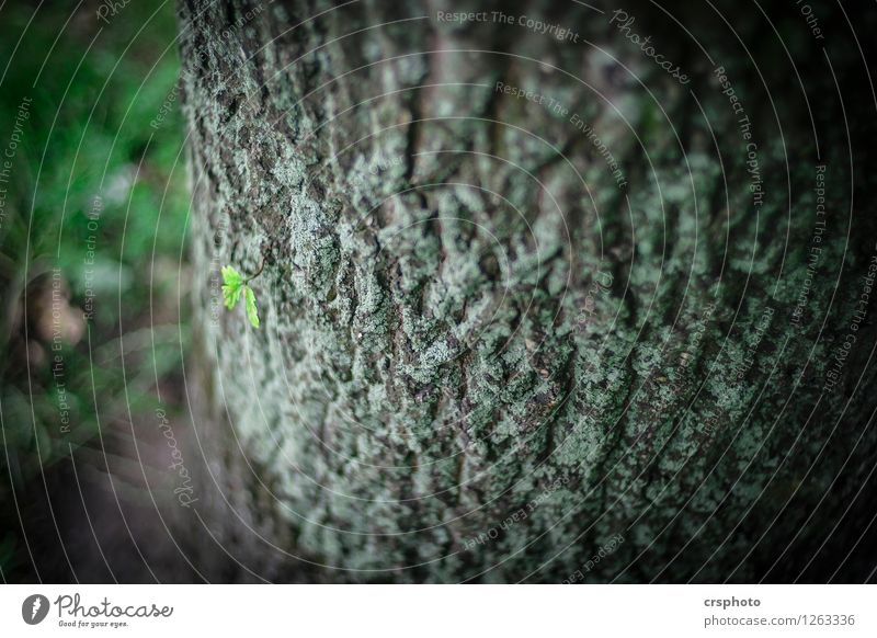 Tender little plant Environment Tree Leaf Green Relaxation Tree bark Shoot Colour photo Exterior shot Evening Shallow depth of field Bird's-eye view