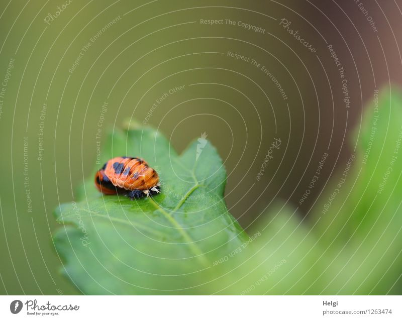Nature Green Calm Animal Black Environment Baby animal Life Natural Small Exceptional Orange Growth Authentic Beginning Uniqueness