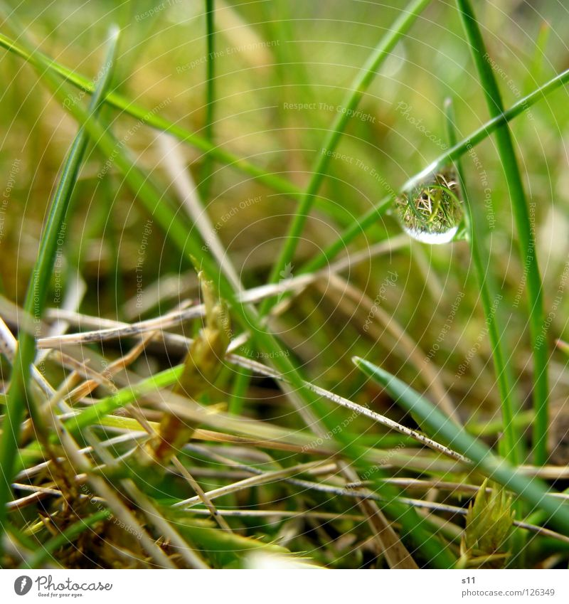 Little Twisted World Mirror Nature Plant Water Drops of water Grass Meadow Rotate Wet Speed Brown Green Transience Grass green Light brown Beige Inverted