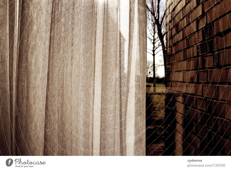 In hiding Drape Curtain Light Window Window pane Screening Loneliness Wall (barrier) Narrow Vantage point Vicinity Flat (apartment) Withdraw Far-off places