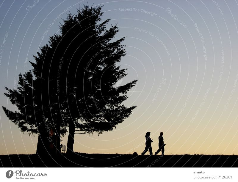 walking Tree Together Nordic walking Dusk Calm Silhouette Playing talkativeness Nature sky building