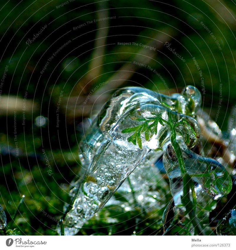 Nature Green Plant Winter Cold Grass Spring Ice Environment Wet Fresh Growth Frost Pure Frozen Sustainability