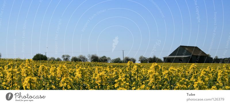 Sky Nature Green Summer Plant House (Residential Structure) Landscape Far-off places Yellow Environment Air Field Clean Agriculture Pure Farm