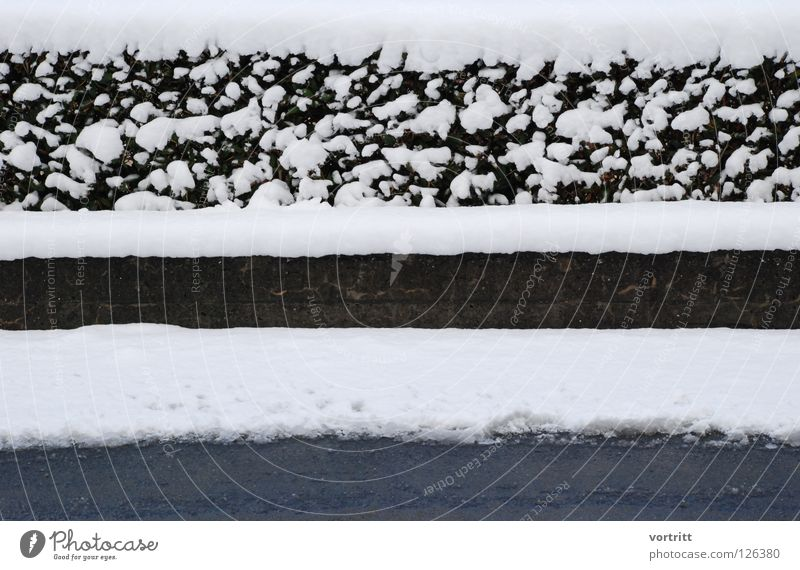 White Plant Winter Black Street Cold Snow Gray Wall (barrier) Art Concrete Simple Minimal Cover Exchange Reduce