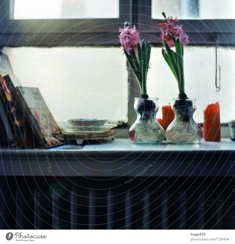 Anna's kitchen Flower Window Checkmark Old building Window board Green Pink Candle Red Kitchen 2 Medium format Book Cookbook Blossom Glass Plate Hyacinthus