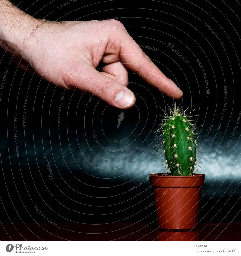 me tu´s Black Hand Fingers Plant Red Brown Table Funny Crazy Gap Glittering Dark Pierce Green Harm Human being ouch Point Thorn Nature Fear To hold on Brave