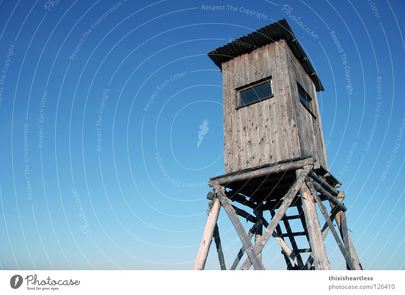 Sky Loneliness Window Wood Fear Glass Walking Tall Safety Stairs Concentrate Wild animal Hunting Hide Hollow