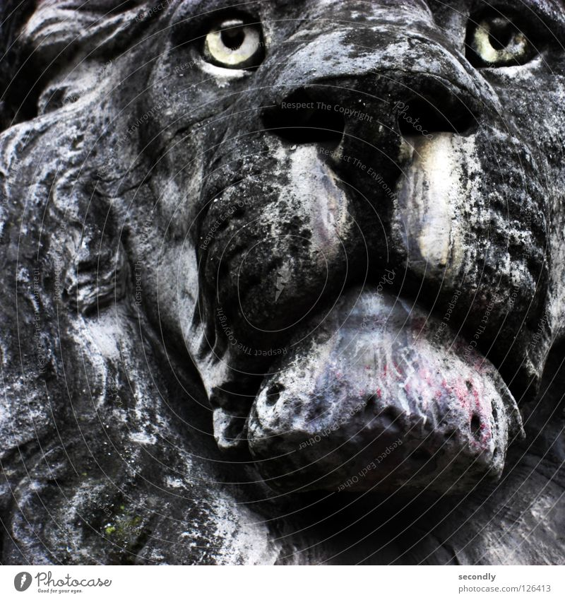gray lion Lion Acid rain Statue Grief Gray Black Animal Distress Mammal Historic Stone Sadness Tears Old Eyes