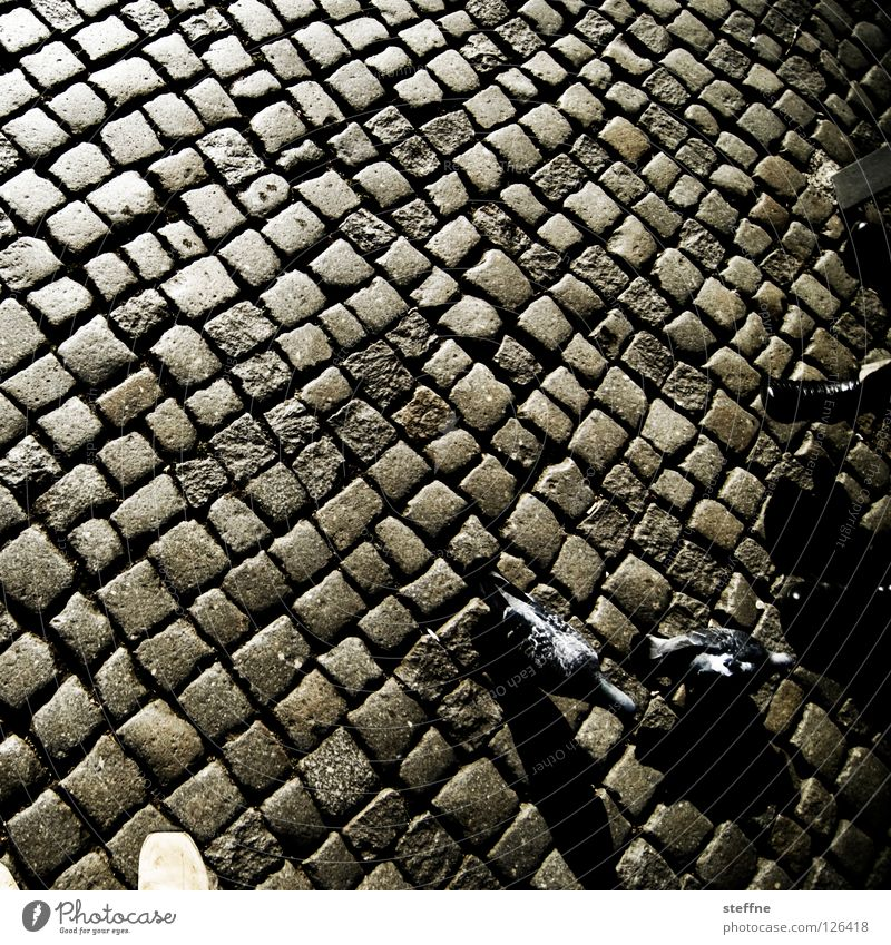City Street Relaxation Stone Feet Footwear Bird Glittering Going Walking Trip Sit Places Break To go for a walk Square
