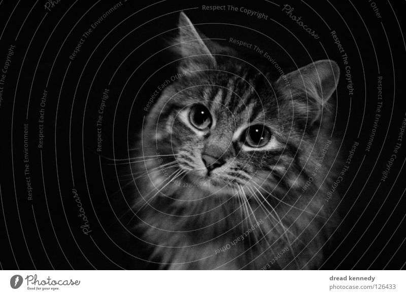 The cat and the sandwich Black & white photo Interior shot Copy Space left Copy Space right Copy Space bottom Bird's-eye view Animal portrait Upward