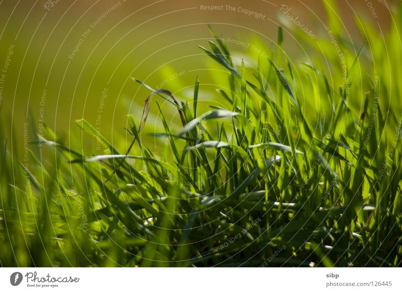 Green Summer Life Meadow Grass Spring Fresh Pasture Beautiful weather Feed