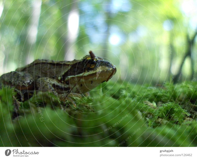 Forest Perspective Floor covering Frog