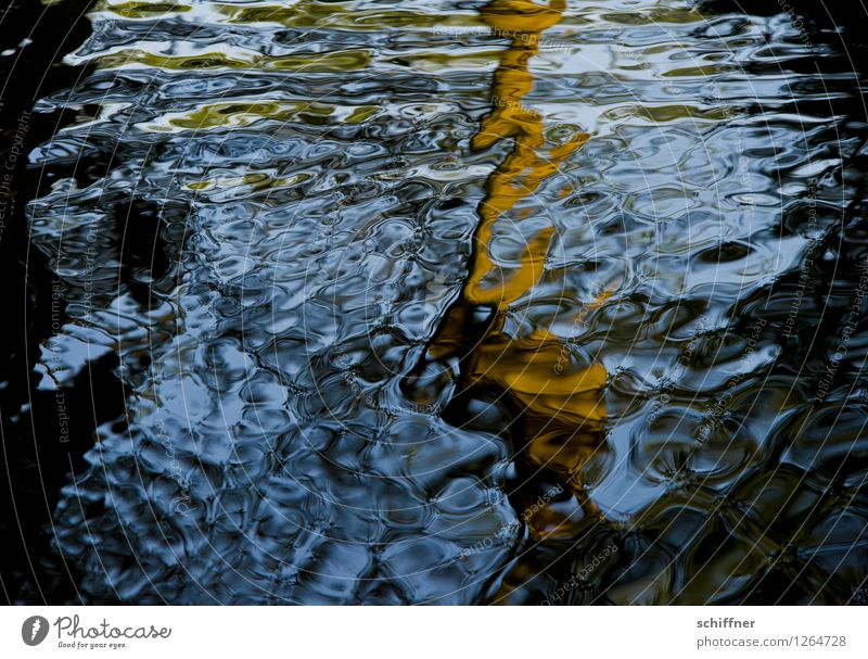 Spreedorado   Watermark River Blue Brown Black Surface of water watermark Water reflection Reflection Structures and shapes Spreewald Dahme-Spreewald