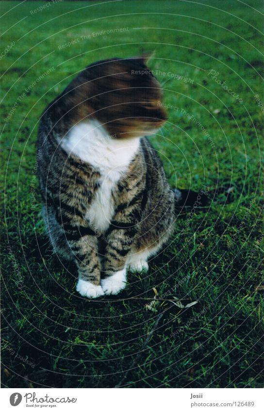 Green Beautiful Cat Grass Movement Spring Bird Fear Sit Sweet Mysterious Friendliness Hunting Dynamics Noble Mammal