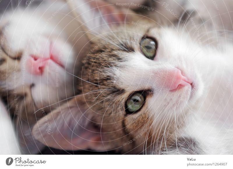 Cat Animal Baby animal Sleep Pelt Pet Animal face