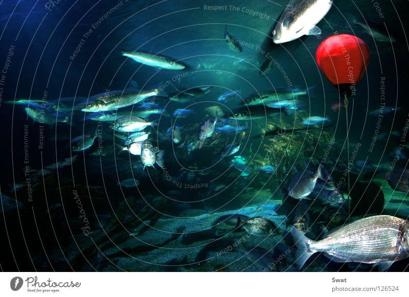 fisheye Green Buoy Ocean Algae Red Fisheye Water Blue Underwater photo sea