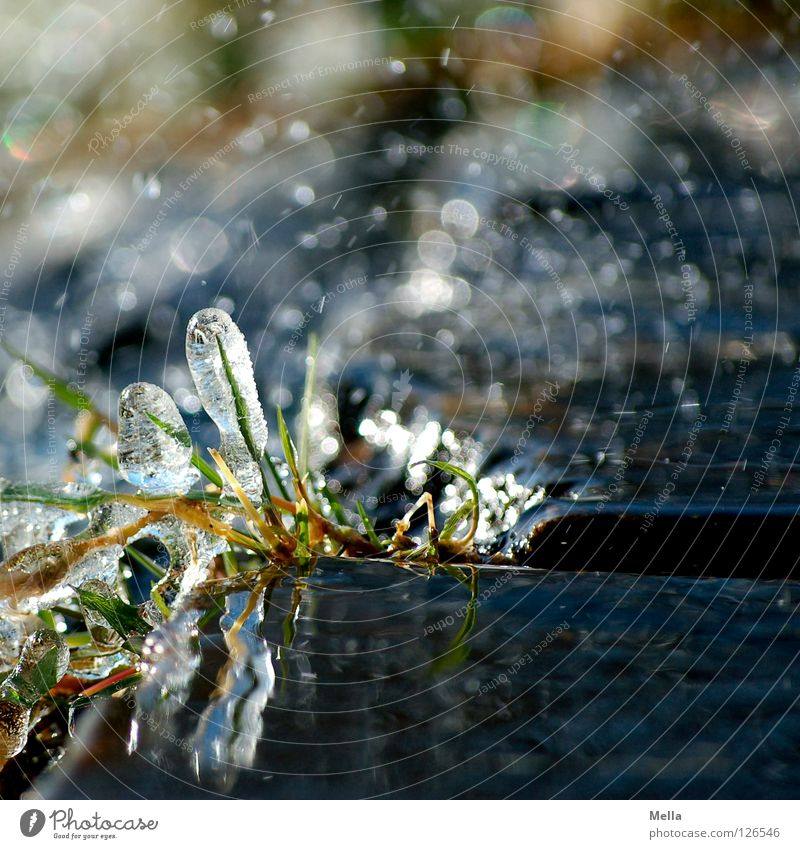 Nature Water Green Plant Winter Cold Grass Spring Gray Ice Glittering Environment Wet Drops of water Fresh Growth