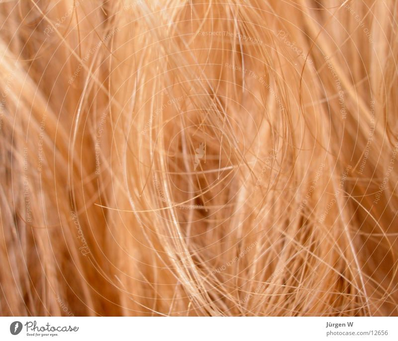 Human being Hair and hairstyles Blonde Macro (Extreme close-up)