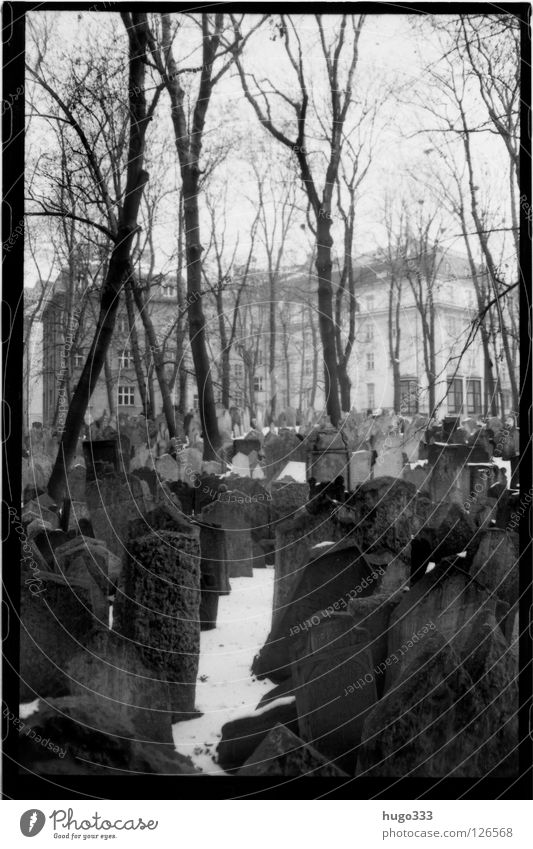 Old Jewish Cemetery Grave Prague Tombstone Grief Tree Calm Prayer Winter Epitaph Death Multiple House (Residential Structure) Distress Europe Sadness
