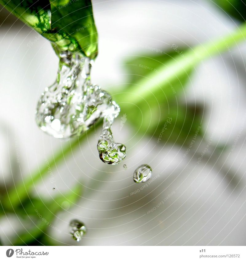 Refreshment Pur II Healthy Bathroom Nature Plant Water Drops of water Navigation Cleaning Cold Wet Green Thirst Pure Jet of water Dripping vital Clarity s11