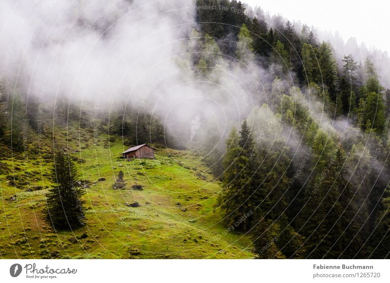 Forest and clouds Environment Nature Landscape Plant Clouds Autumn Bad weather Fog Alps Mountain Hut Brown Gray Green Coniferous forest Tree Wooden hut Meadow