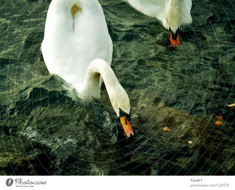 Blue Water Green White Animal Dark Life Lake Bird Swimming & Bathing Waves Wind Dirty Dangerous Nutrition Railroad