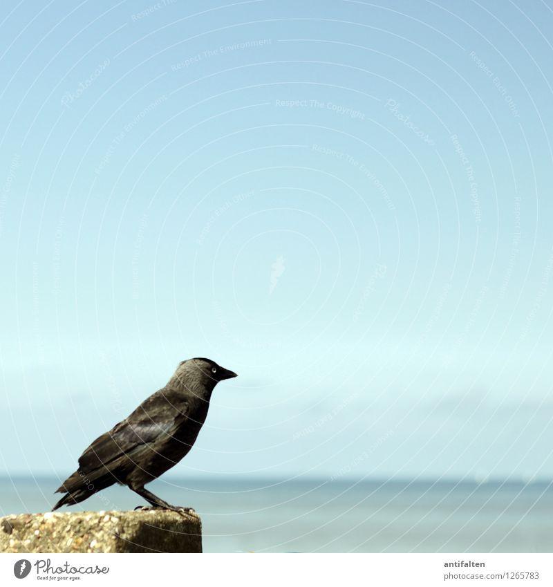 Sky Nature Vacation & Travel Blue Summer Water Sun Ocean Animal Far-off places Beach Coast Freedom Bird Waves Wild animal
