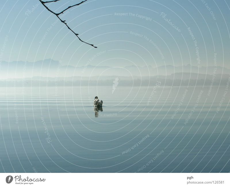 Where are you going? Swan Sunset Lake Starnberg Moody Fog Water Sky Blue Stone Branch Mountain