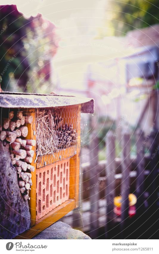 insect hotel Leisure and hobbies Vacation & Travel Tourism Living or residing Flat (apartment) House (Residential Structure) Garden Environment Nature Plant
