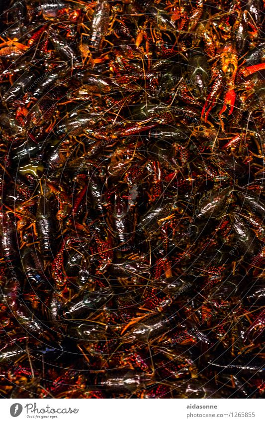crabs Animal Flock Claustrophobia Stress Gluttony Crab cutter Shrimp Many Intensive stock rearing Food Seafood China Colour photo Exterior shot Day
