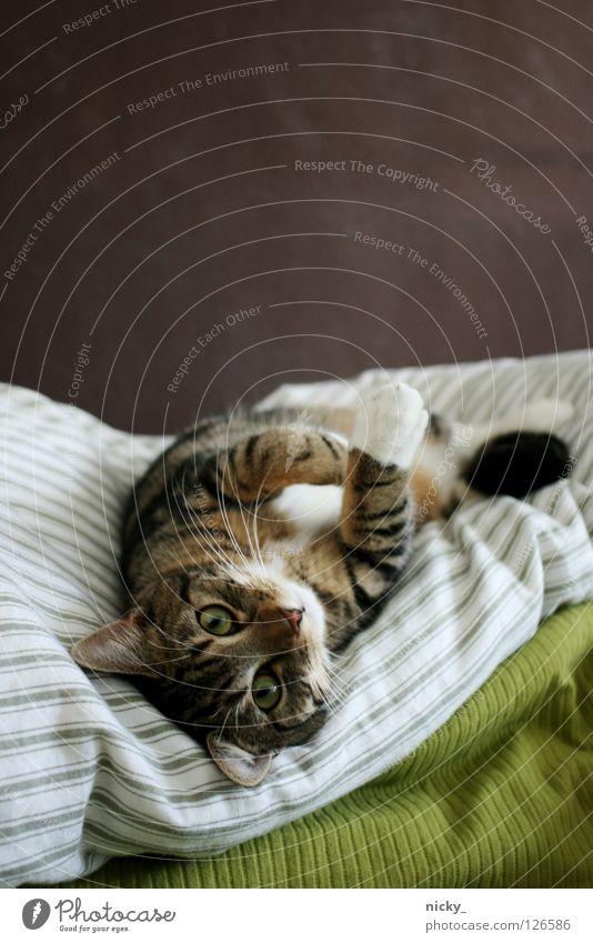 Green Eyes Animal Cat Nose Bed Pelt Mammal Pet Lovely
