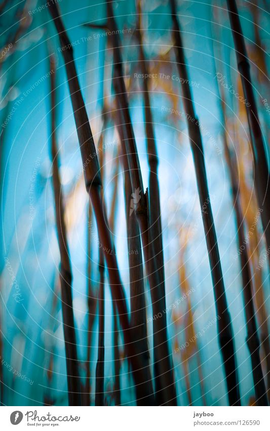 shrubs Yellow Grass Long Line Dark Physics Blue Tall Sky Warmth Exterior shot