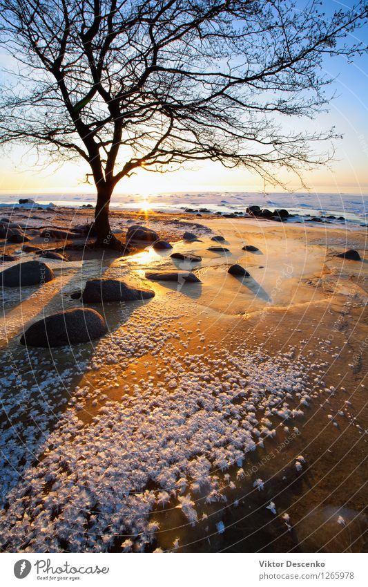 Tree near the stones on a frozen red sand Sky Nature Vacation & Travel Blue Beautiful Colour White Sun Relaxation Ocean Landscape Beach Winter Coast Snow Stone