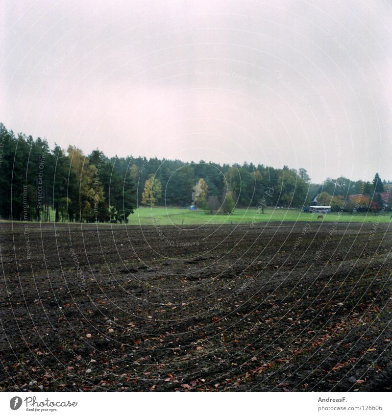 October Forest Edge of the forest Field Rural Medium format Agriculture Plow Autumn Gray Rain November Coniferous forest Farm Village Americas Province Sand