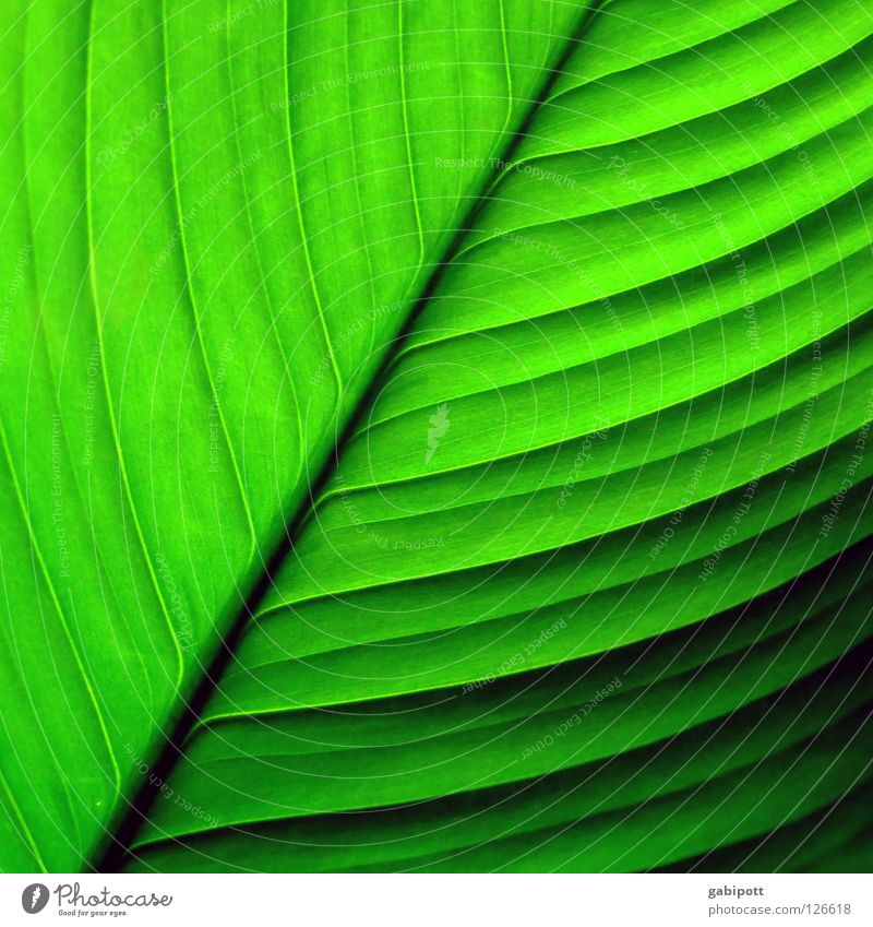 Nature Green Beautiful Plant Flower Colour Leaf Relaxation Life Happy Line Healthy Glittering Growth Fresh Authentic