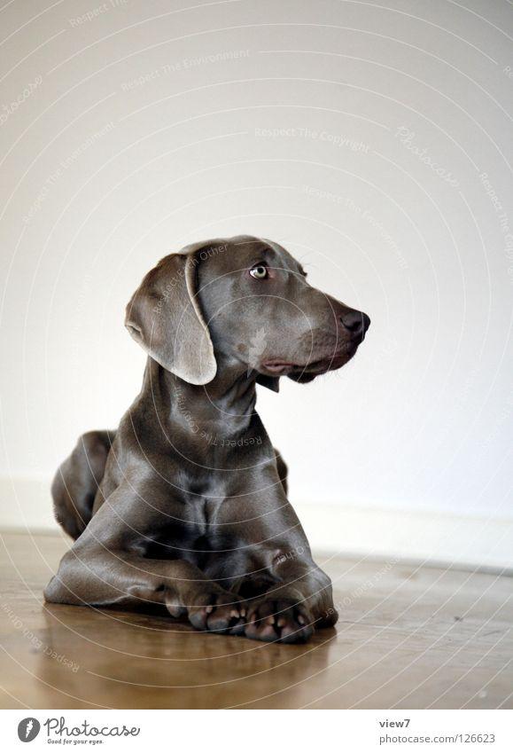 Beautiful Eyes Wood Dog Glittering Sit Lie Nose Growth Floor covering Cute Animal face Pelt Mammal Pet Pride