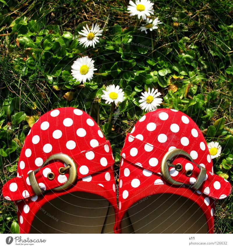 My sister's shoes Footwear Red White Green Point Spotted Buckle Meadow Grass Flower Blossom Daisy Plant 2 Clothing Obedient Bird's-eye view Girlish Woman Spring
