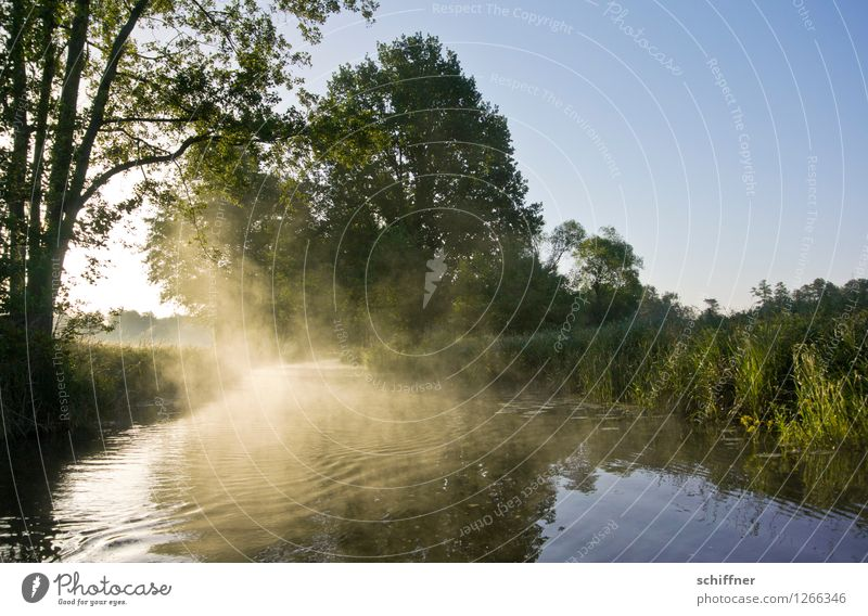 Nature Plant Water Tree Landscape Forest Environment Grass Exceptional Fog Waves Bushes Beautiful weather River Cloudless sky River bank