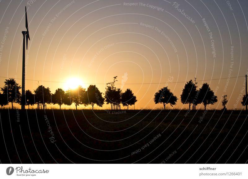 Plant Summer Sun Tree Landscape Black Meadow Field Beautiful weather Wind energy plant Renewable energy Row of trees