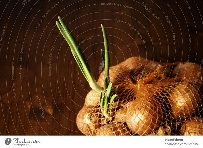 outburst Vegetable Plant Wood Net Growth Fresh Rebellious Brown Green Escape Onion onion net Shoot Nutrition Sack Expel Verdant Interior shot Deserted