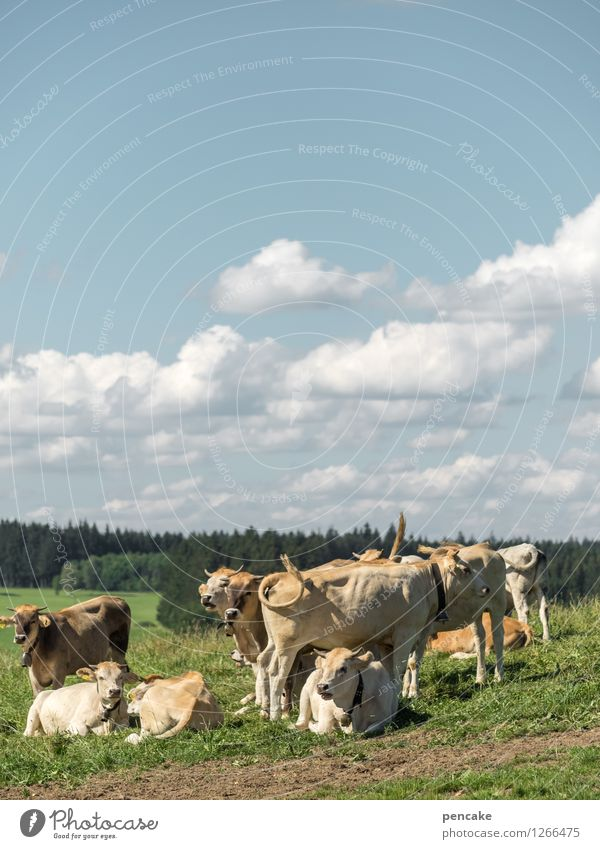 Küa scheener wiad girls Nature Landscape Elements Earth Sky Clouds Summer Beautiful weather Meadow Field Mountain Allgäu Animal Pet Group of animals Herd