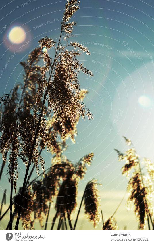 Beautiful Sky Sun Plant Winter Calm Lamp Grass Sadness Warmth Air Lighting Power Glittering Wind Hope