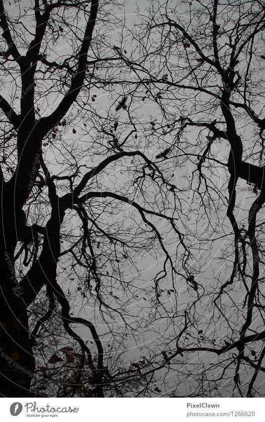 Nature Vacation & Travel Tree Landscape Calm Animal Forest Black Sadness Autumn Style Bird Moody Design Dream Tourism